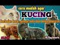 Cara Mudah Agar Kucing Gemuk dan Bebas Mencret
