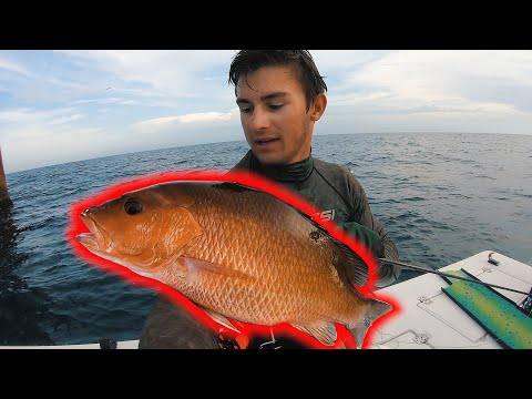 Spearfishing Artificial Reefs For Snapper! || Free Diving Gulf Of Mexico 2019