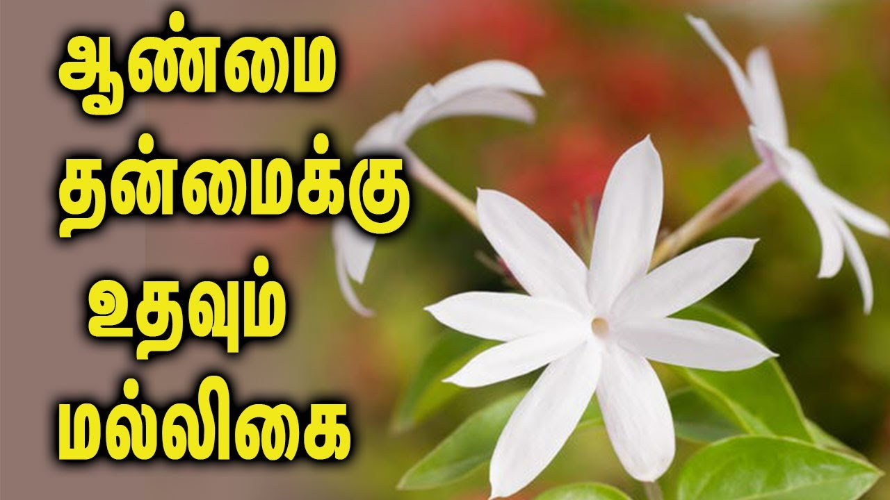 Medical benefits in jasmine tamil health tips youtube medical benefits in jasmine tamil health tips izmirmasajfo