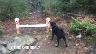 Ellie and Buffy go to Dog Mountain, Vermont