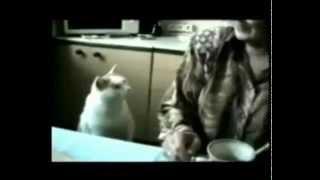самые смешные видео про животных! нарезка. №9