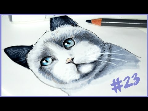 British Shorthair Cat (Drawing Timelapse) - A DRAWING A DAY #23