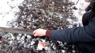 ПОСЕВ МОРКОВИ. Как посеять морковь под зиму(В этом видео я расскажу о том, как я сею морковь под зиму, т.е. в ноябре. Ставьте лайки, комментируйте видео!..., 2014-12-02T04:45:26.000Z)