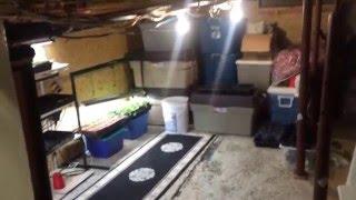 PAUL'S BACK YARD GARDEN (4/3/16) Growing veggies in zone 4A