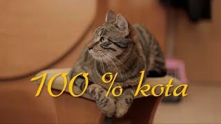 100 % kota