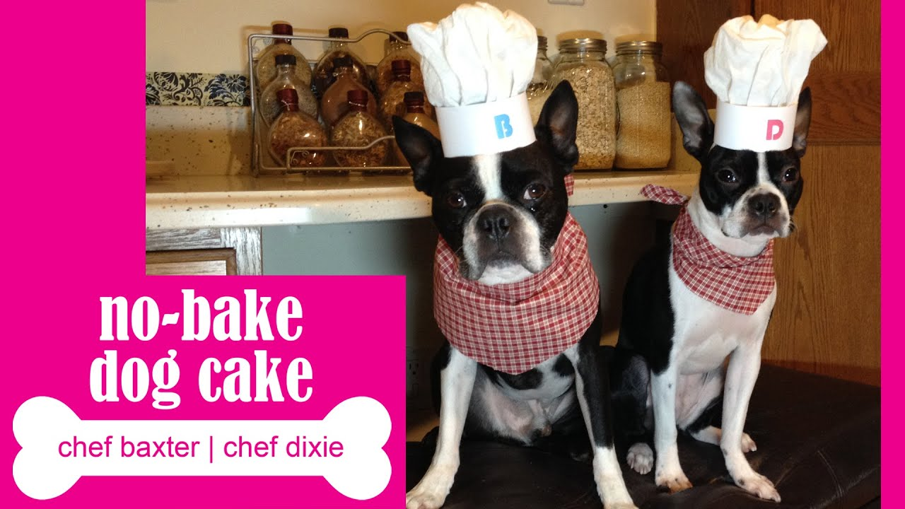 Dog Birthday Cake Boston Terrier Chef Youtube