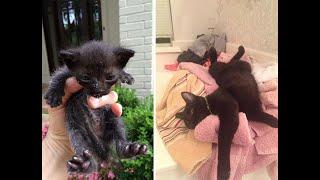 Бездомные коты до и после того как их приютили