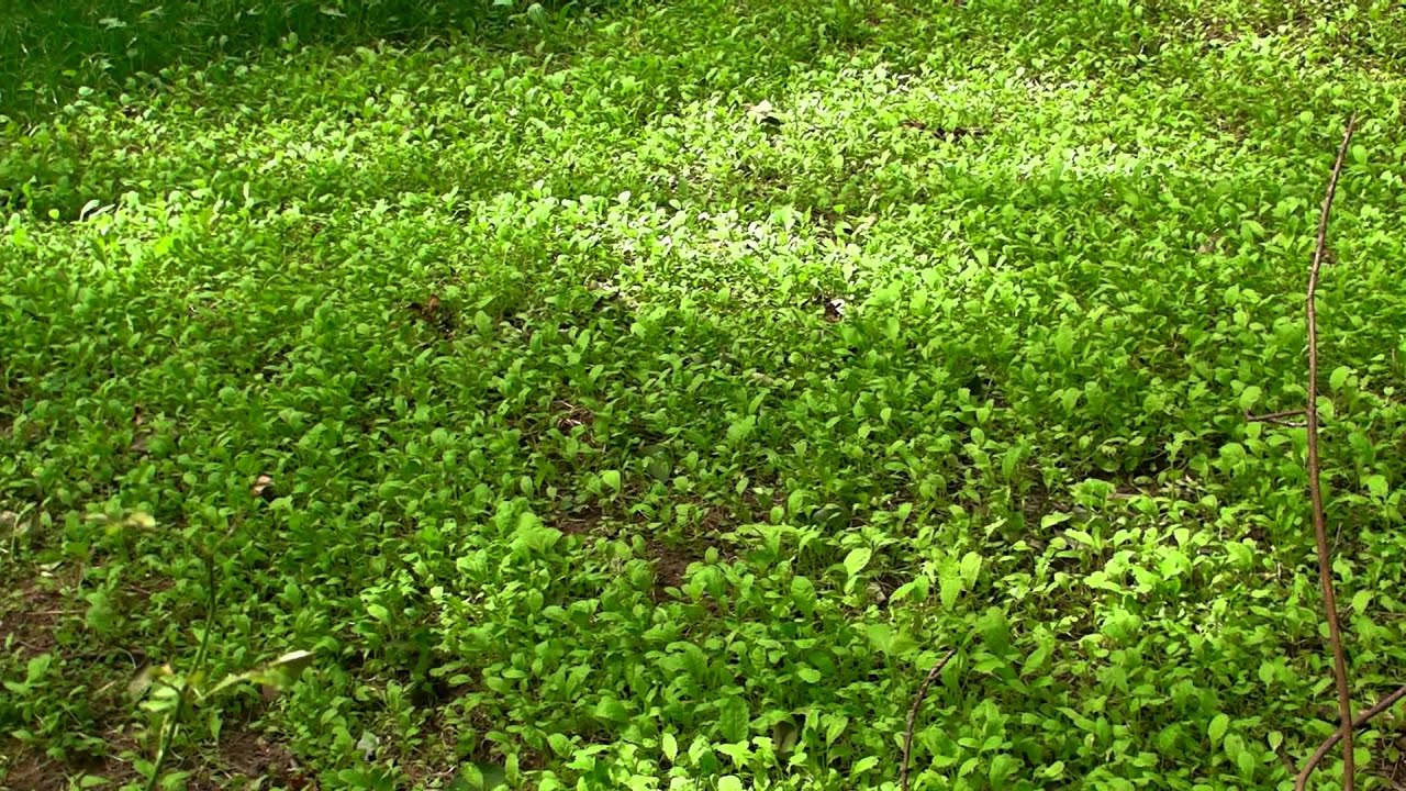 How To Make A Food Plot