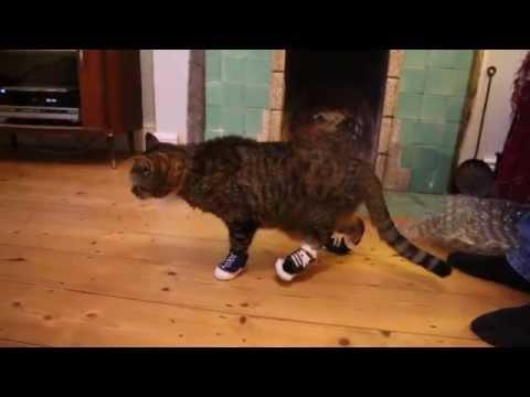 converse cats