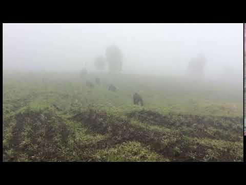 The Africa Adventure Company - Trekking Gorillas in Rwanda