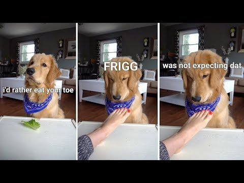 ASMR Dog Reviewing Different Types of Food - Tucker Taste Test #2