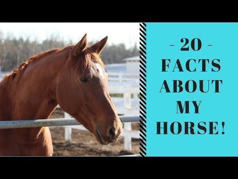 20 Facts About My Horse!