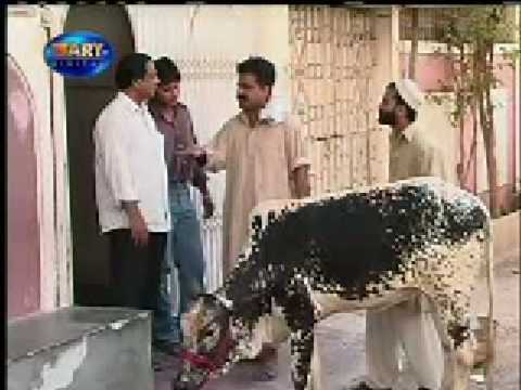 pakistan funny video(4)