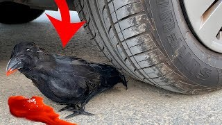 Crushing Crunchy & Soft Things by Car! EXPERIMENT CAR vs RAVEN (toy)