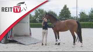 Gambar cover Das junge Pferd verladen Teil 2 | Verladetraining mit Linda Weritz