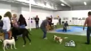 Paradise 4 Paws Dfw Featured On Cw33 Dog Vacation
