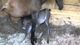 May and Boots in the foaling barn