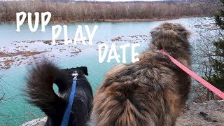 MY DOG GOES ON A PLAY DATE!