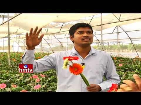Gerbera Flowers Cultivation Techniques By Ideal Farmer In Polyhouse | Nela Talli | HMTV