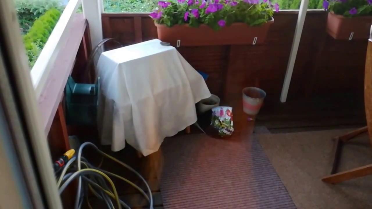 ampiaispesän hävittäminen