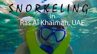 Ras Al Khaimah Visit   Snorkeling in Ice Land, Ras Al Khaimah, UAE   Travel Vlogs