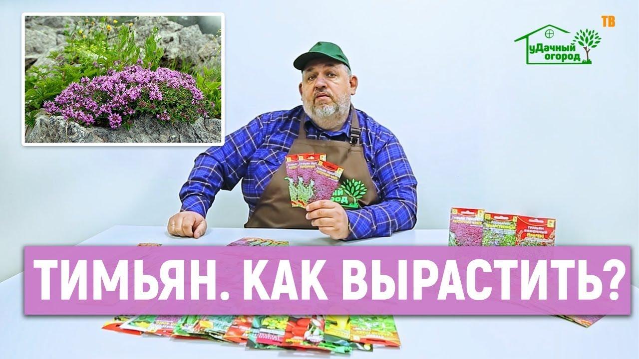Купить эстрагон свежего урожая в магазине спайсшоп. Доставка по киеву и. Со слабым запахом (этот вид очень редко цветет, а семена его дозревают.