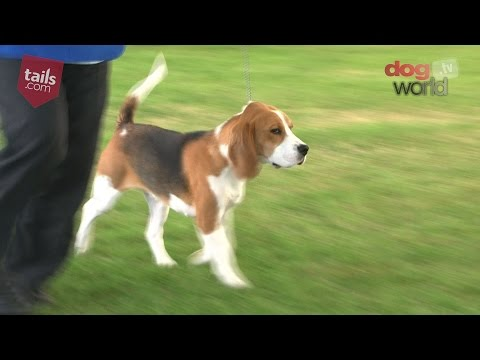 Windsor Dog Show 2016 - Best Puppy in Show