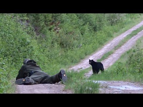 Black bear hunt in BC 2016,  Bjørnejakt i BC 2016