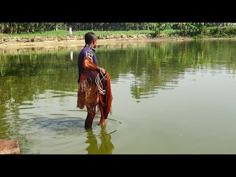Net Fishing | Catching Fish With Cast Net | Net Fishing in the village (Part-274)
