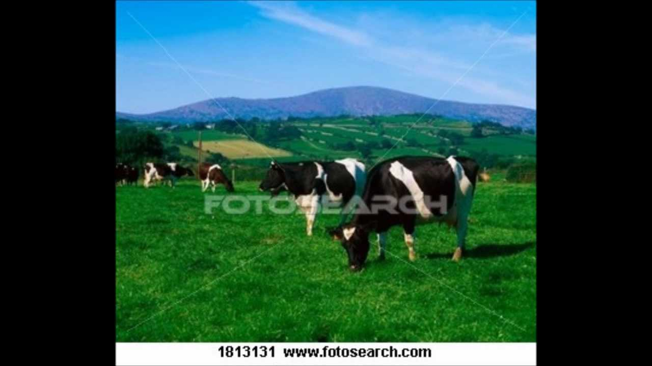 H καλή μας αγελάδα 7a70594ccd2