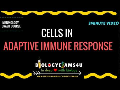 Cells in Acquired Immunity