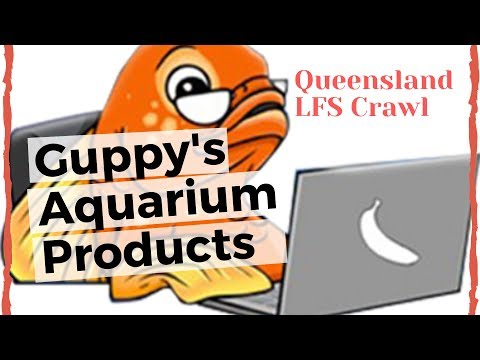 QLD Fish Shop Tour - Guppy's Aquarium Products