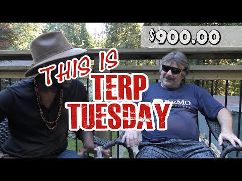 Terp Tuesday with Jonny B and Horatio - Cold Terp Vaping..?