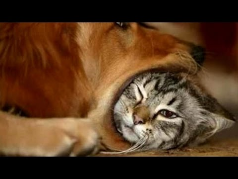 The most hilarious and very best ANIMAL moments #9 – Funny animal compilation – Watch & laugh!
