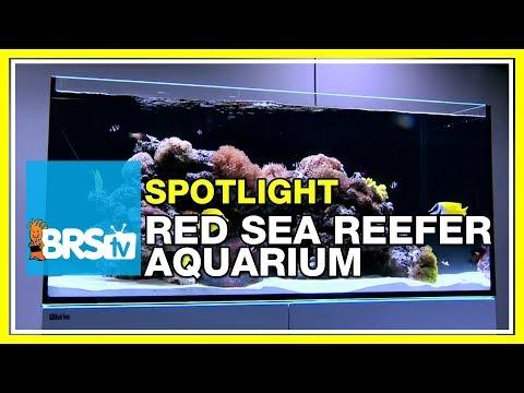 How to set up a reef tank - Red Sea Reefer Aquarium | BRStv Spotlight