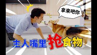 【小短腿Duby】狗狗敢不敢抢主人嘴里的食物,这简直是个送命题
