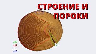 Древесина - строение и пороки 🌳😈 ➄(Человек использует древесину на протяжении многих тысячелетий. Сайт: http://5orka.ru Группа Вконтакте: https://vk.com/5orka..., 2015-09-24T13:05:12.000Z)
