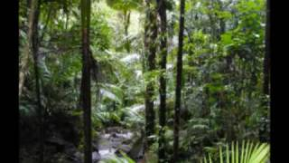 el yunque puerto rico rain forest