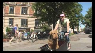 Man Bikes Dog - Copenhagen Bicycles and Dogs
