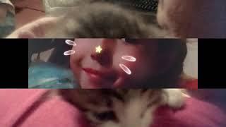 Мои любимые котята 🐈🐈🐈🐈