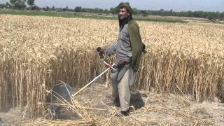 Wheat Cutting Tool