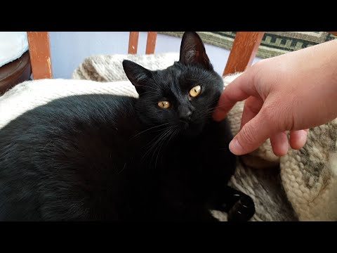Cute Purring Cats Getting Some Happy Petting