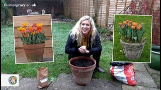 How to plant TuĮips (bulbs) in a pot or container - FarmerGracy.co.uk