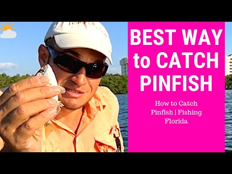 How To Catch Pin Fish | Fishing Florida