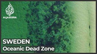 Sweden oceans: Scientists measure largest dead zone in world
