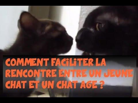 Chat ados // Tchat pour ados // Tchat sans inscription