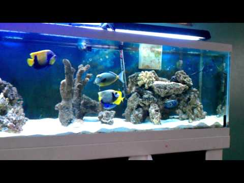 Saltwater Aquarium Hd