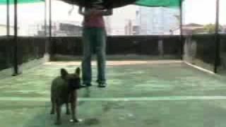 Li Ming - Obedience class : Wait Command 02