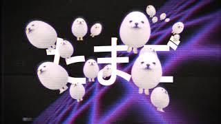 【eggdog wave】