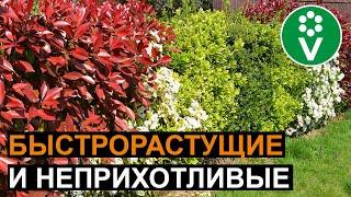 5 самых лучших кустарников для живой изгороди